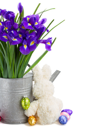 bunch of blue  irise flowers in watering can   with easter eggs and bunny   isolated on white background photo
