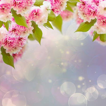 Blossoming cherry tree  flowers on sky background photo