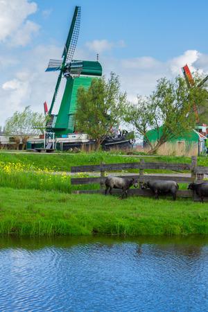 zaan: dutch windmills over  river in Zaanse Schans, Holland