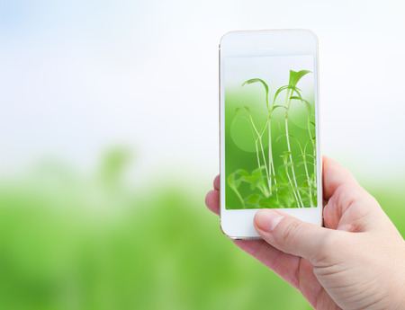 Woman hand taking picture with  smart phone against spring green background photo