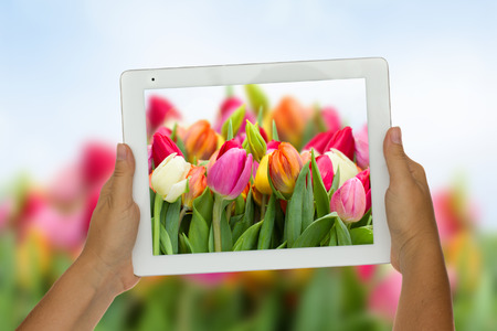 Woman hand holding tablet  against spring flowers  background photo