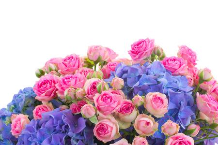 border of pink roses and blue hortenzia flowers close up  isolated on white background photo