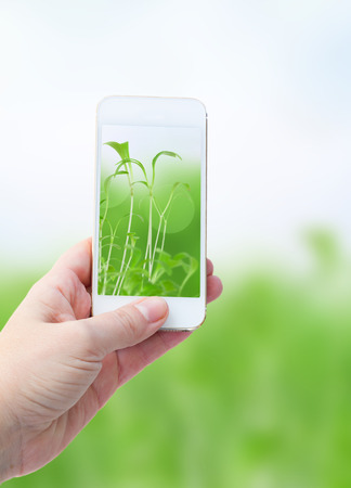 Woman hand taking picture with  smart phone against  defocused green nature  background photo