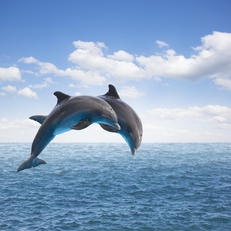 two jumping dolphins, seascape with deep  ocean  waters and cloudscape Stock Photo