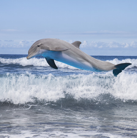 jumping dolphin, beautiful seascape with ocean waves photo