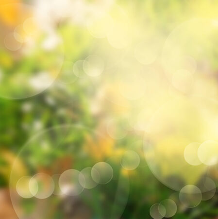 autumn green and yellow grass  bokeh background with sun beams