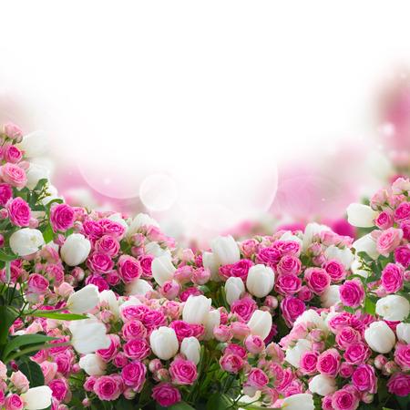 borde de flores: ramo de rosas frescas de color rosa y tulipanes blancos flores frontera en el fondo blanco