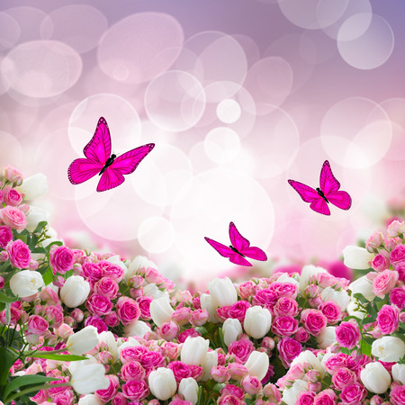 bunch  of fresh pink roses and wtite tulips flowers  with butterflies on bokeh background photo