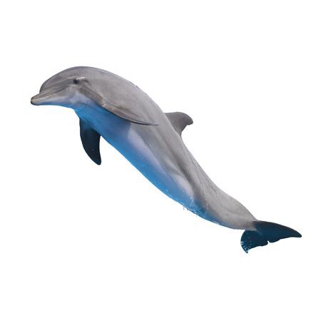un delfín saltando aislados sobre fondo blanco Foto de archivo