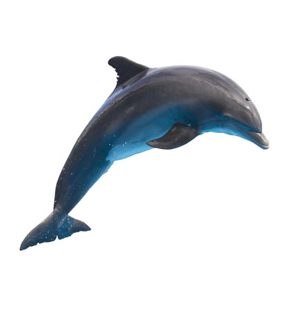 dolphins: single jumping dolphin isolated on white background