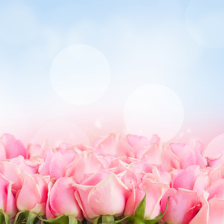 blue and green: border  of  pink garden roses  on blue sky background