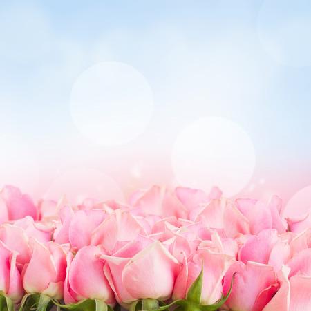 rosas rosadas: frontera de rosas de jard�n de color rosa en el fondo del cielo azul Foto de archivo