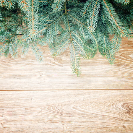 blue  fir tree border on wooden background photo