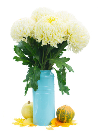 bouquet of yellow mums in blue pot with pumpkins   isolated on white background photo