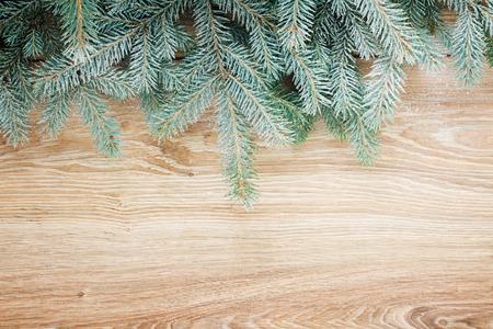fir tree border photo