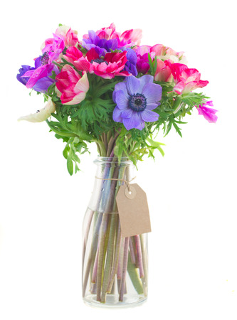 bouquet of anemone flowers isolated on white background photo