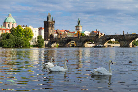Swans with background of Charles bridge photo