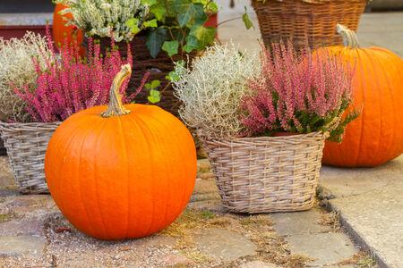 pumpkin and heather photo