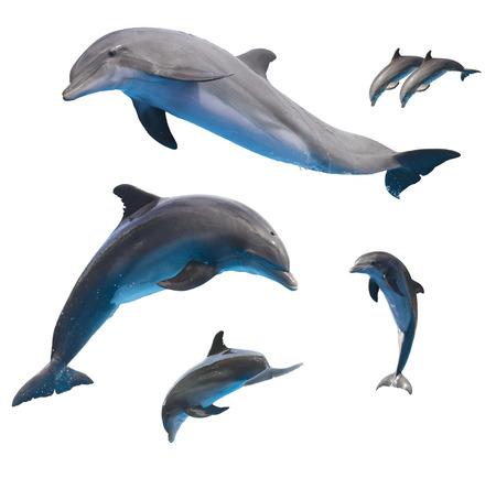 白い背景に分離されたイルカをジャンプのセット 写真素材