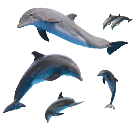 set of jumping dolphins isolated on white background photo