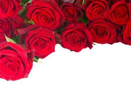 新鮮な紅赤庭バラの境界線 写真素材