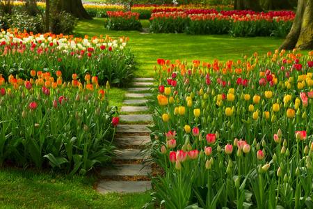 Stone path winding in fresh spring flower garden photo