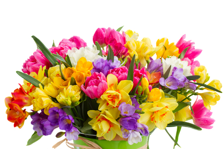 colorful flowers: blue, pink  and yellow freesia and daffodil  flowers  close up  isolated on white background