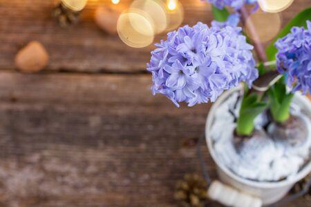 Hyacinths flowers photo