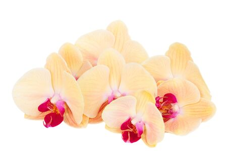 orchid branch: orange  orchid branch Stock Photo