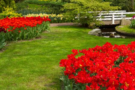 daffodils in spring garden photo