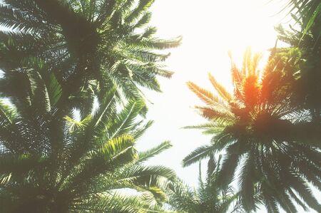 sol radiante: palmera  Foto de archivo