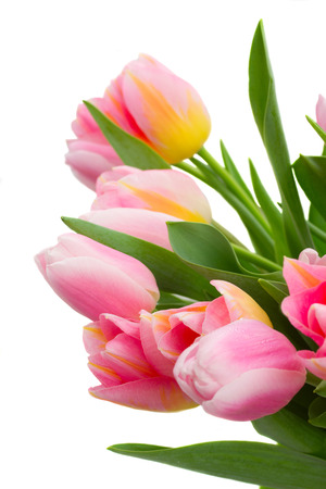 posy: posy of pink and yellow  tulip flowers   close up   isolated on white background