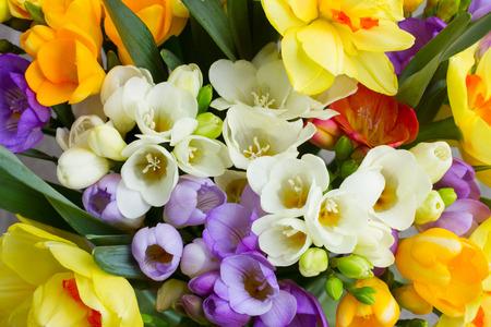 and bouquet: mazzo di fiori freschi primavera freesea close up Archivio Fotografico