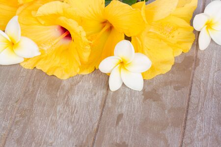 colorful  hibiscus and frangipani flowers  on wooden background with copy space photo
