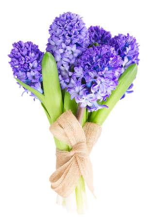 Blue  hyacinth flowers  isolated on white background photo