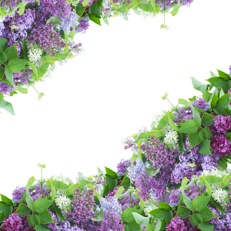 Frame of  of Lilac flowers   on white background photo