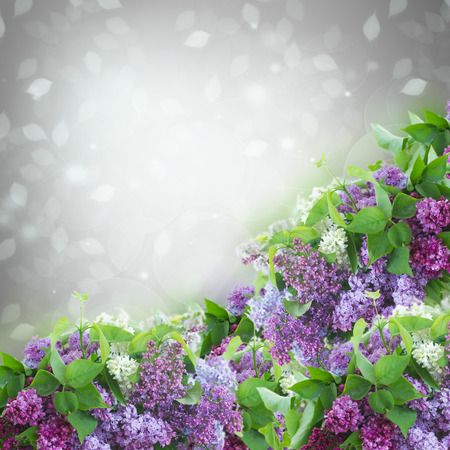Bush of  of Lilac flowers   on gray bokeh  background photo