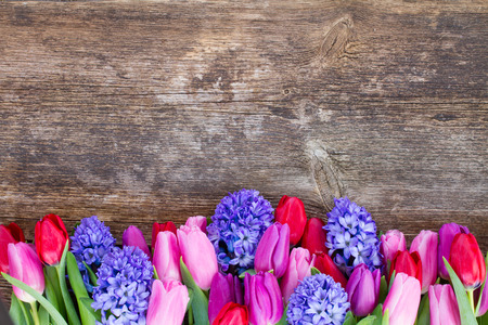 purple floral: blue hyacinth and  tulips  close up on wooden background