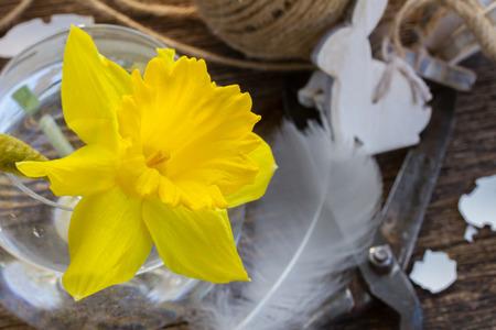 daffodil: easter daffodil
