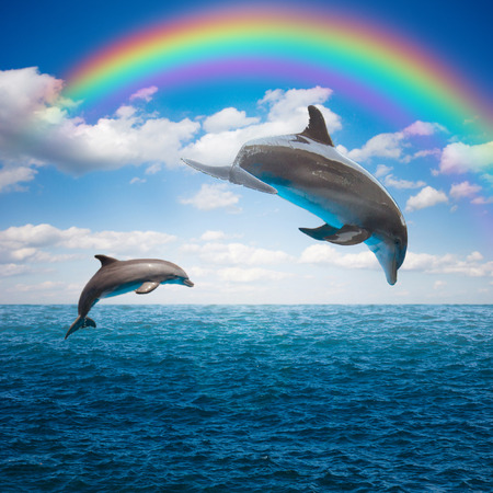 par de delfines saltando
