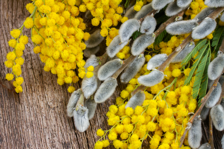catkins: French mimosa with catkins