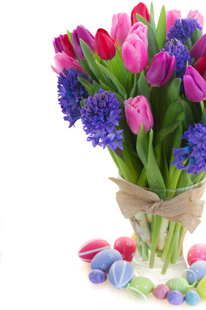 red pink: bunch of blue hyacinth and red, pink and purple tulips close up  isolated on white background
