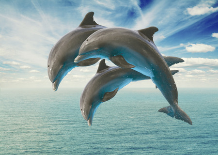 three  jumping dolphins photo