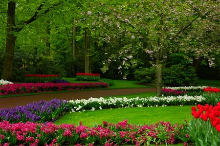 keukenhof: spring garden in Keukenhof, Holland Stock Photo