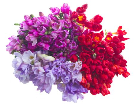 freesia: freesia  flowers