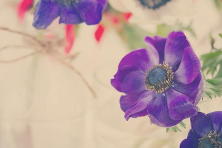 anemone flower: blu anemone fiore da vicino, retr� tonica