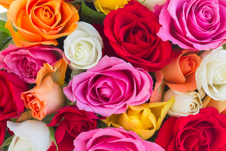 background of fresh  pink, yellow, orange, red, and white fresh roses