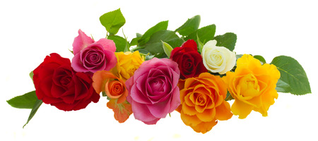 row of fresh pink, yellow, orange, red, and white fresh roses isolated on white background Stock Photo