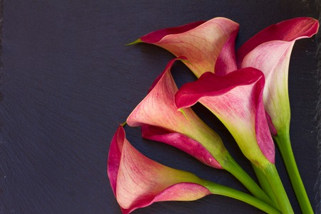 lilly: Calla lilly