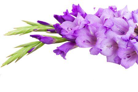 gladiolus: border of gladiolus flowers